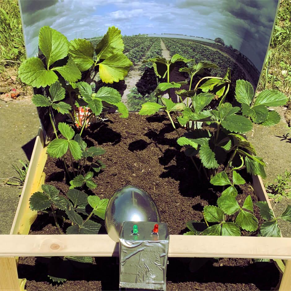 Erdbeersteige mit Erdbeerpflanzen bepflanzt, einer Seite mit Panorama, auf anderer Seite mit Roboterarm versehen